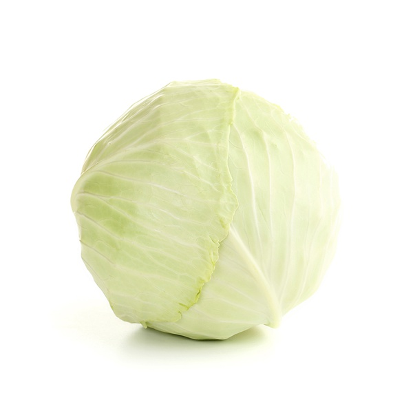 White cabbage Holland