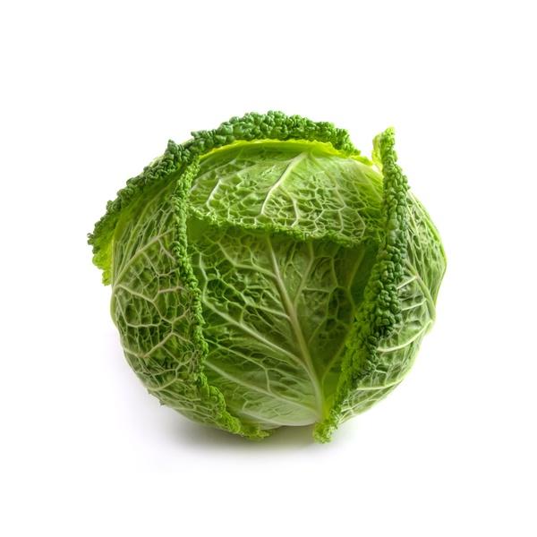 Savoy cabbage Holland