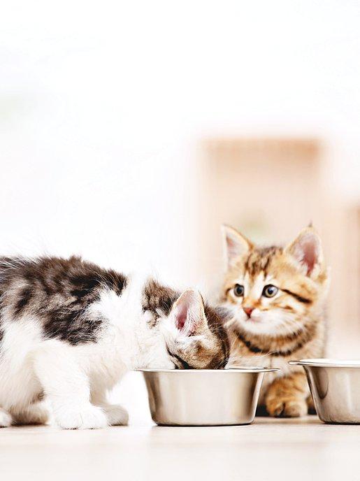 Kitty Nutrition